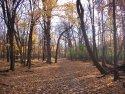 """tree community"" by Julia Walsh, FSPA"